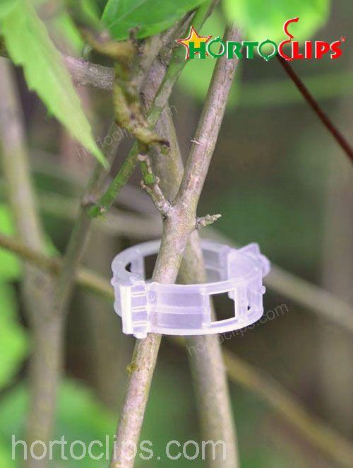 clips para plantas