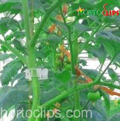 Hortoclips para el cultivo de tomate